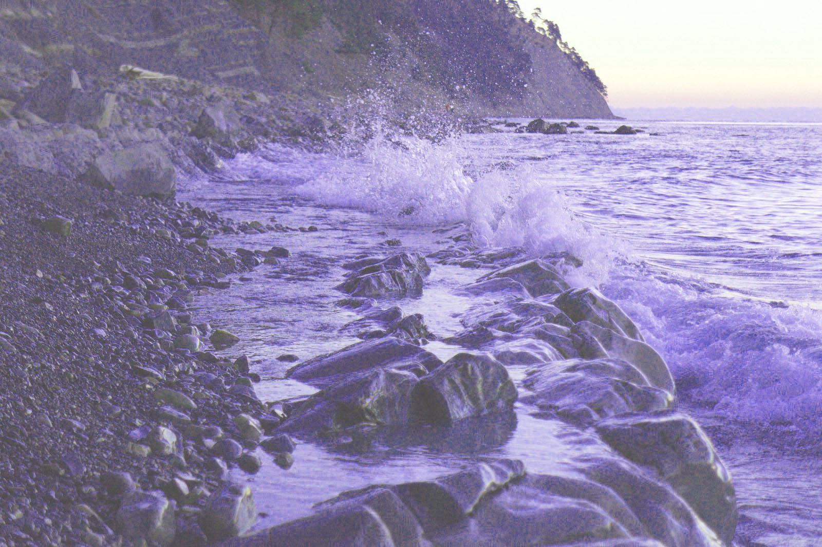 Самые опасные морские обитатели черного моря