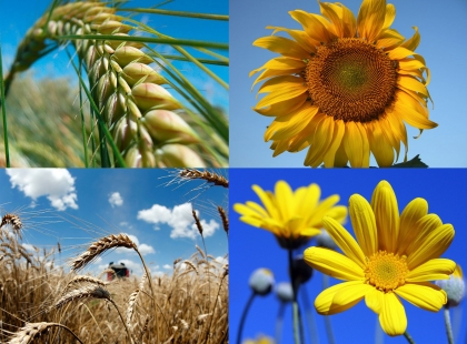 красота украинской природы