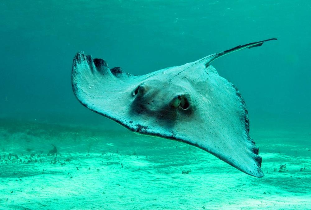 посылать морские обитатели черного моря картинки понравившиеся странички